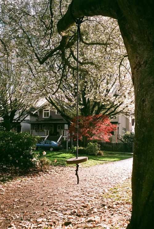 swing, sidewalk, blossom, sunlight